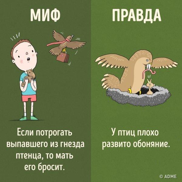 Зоомагазин ЛапУшки на проспекте Октября - отзывы, фото, каталог ... dc5b4e9af30
