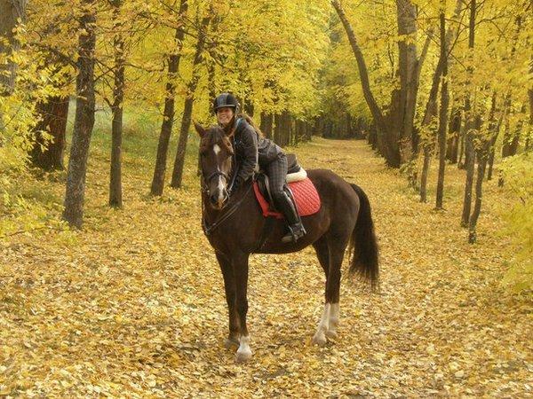 договор инструкция для конных прогулок и обучение верховой езде